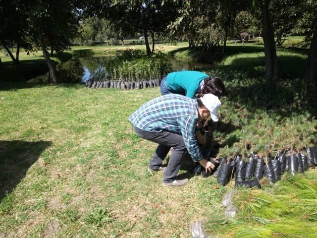 Ayuntamiento se suma a la campaña de forestación distribuyendo 7 mil árboles