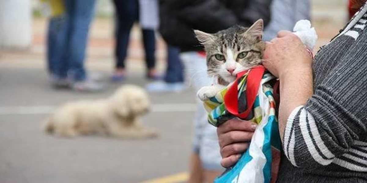 Invitan a la ciudadanía de Tetla a esterilizar a sus mascotas