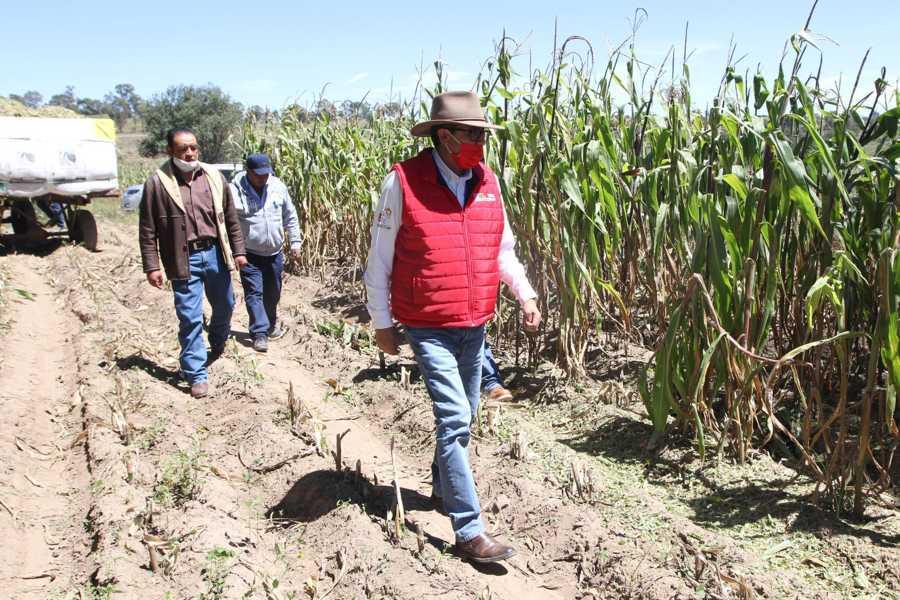 Supervisa Sefoa cultivos agrícolas por comienzo de heladas en el estado