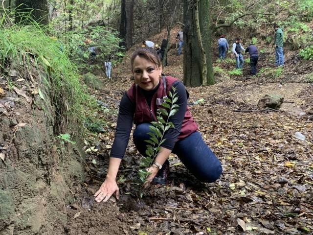Realizan campaña de reforestación en la zona de Tlacuetla en Cuauhtelulpan