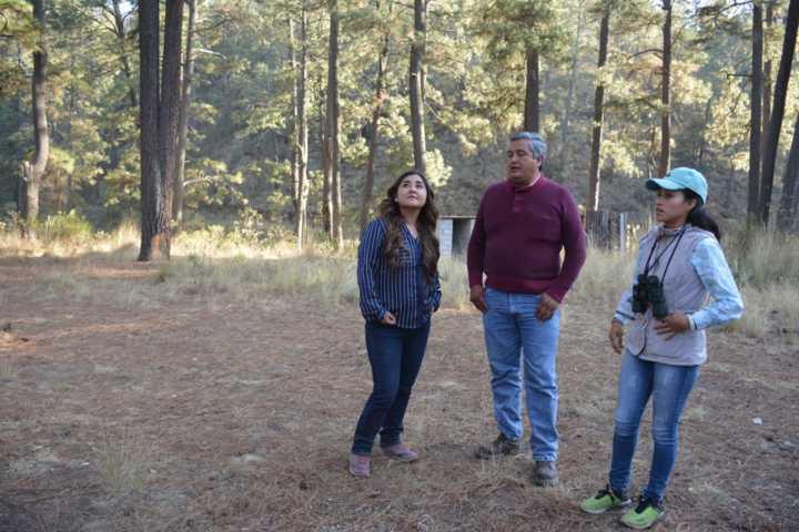 Inspeccionan centros de avistamiento de luciérnagas en Calpulalpan