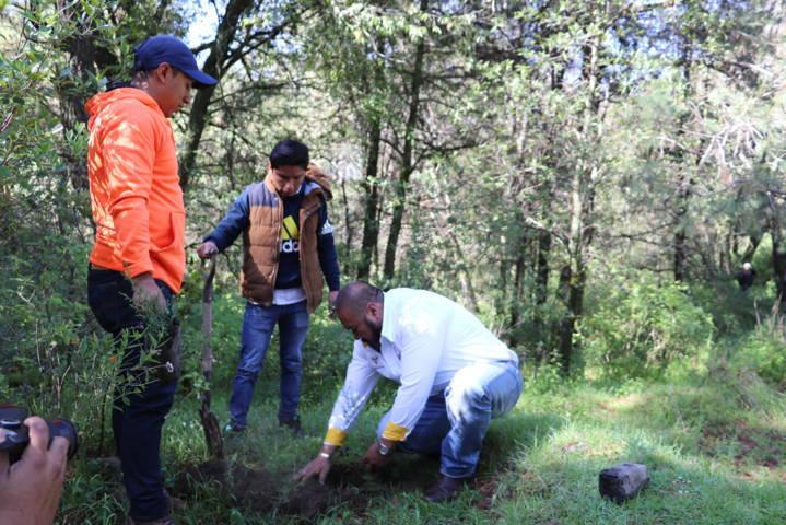 Reforestan Gobierno de Xicohtzinco y pobladores más de 4 mil árboles en La Malinche