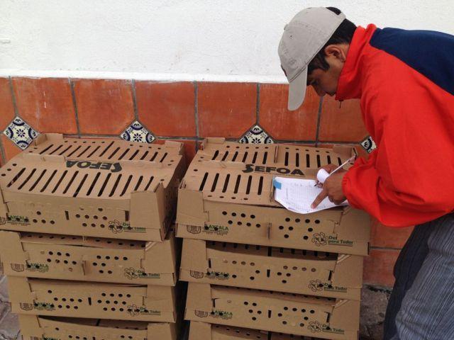 Suman más de 250 familias beneficiadas en Totolac, con paquetes de especies menores