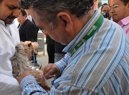 Niegan que exista desabasto de vacunas antirrábica humana