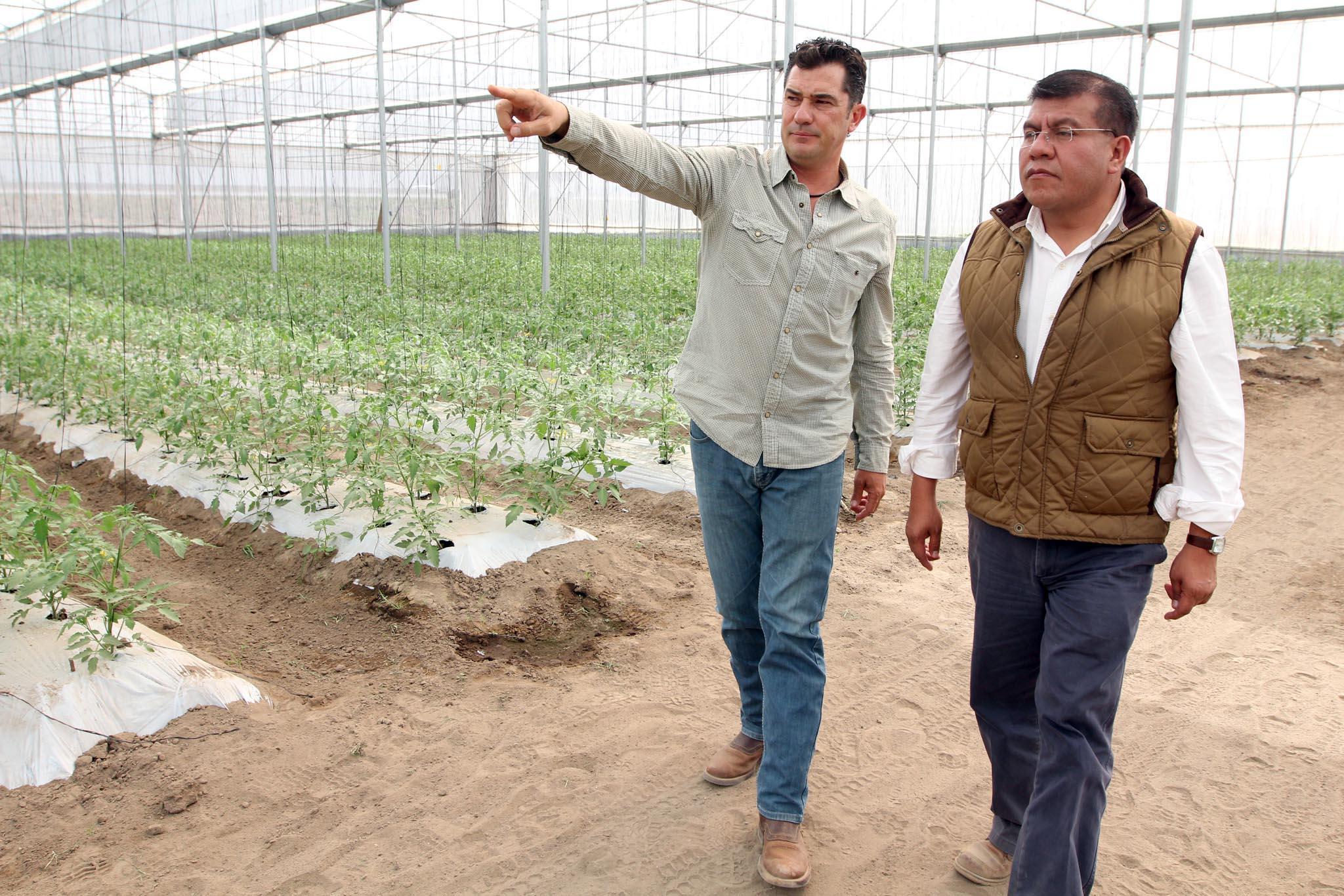Busca Sefoa reforzar agricultura protegida