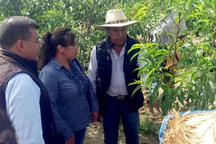 Impulsa SEFOA política de apoyo incluyente en beneficio de productores