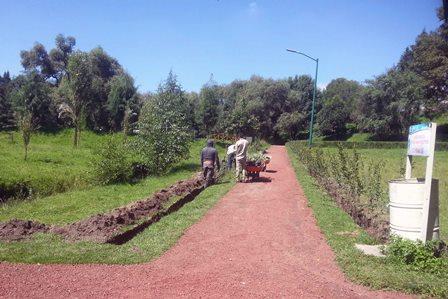 Siembran autoridades seis mil árboles en tres áreas forestales