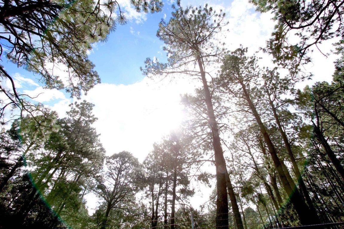 Registra Tlaxcala óptima calidad del aire: CGE