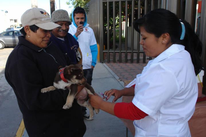 Realiza SESA jornada gratuita de esterilización de mascotas
