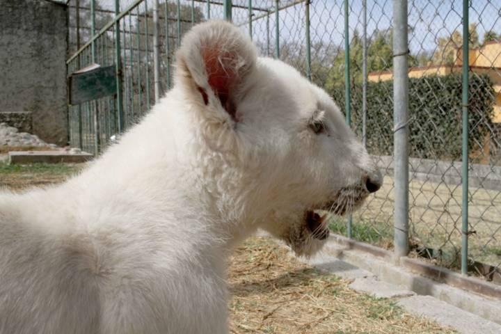 11 y 18 de Febrero, entrada gratuita al Zoológico del Altiplano