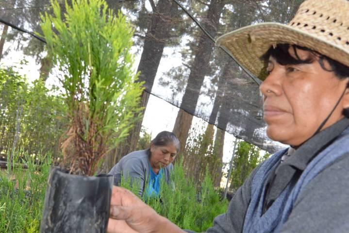 Inicia CGE servicio de resguardo de árboles ornamentales