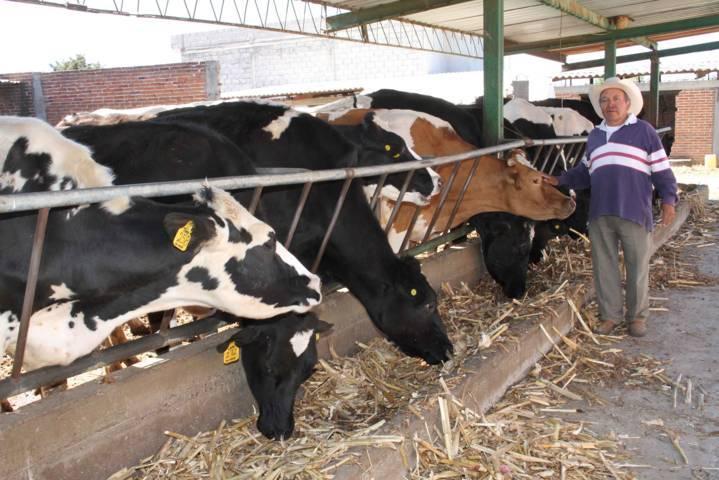 Habilita SEFOA a cuatro municipios más como expendedores de guías para traslado de ganado