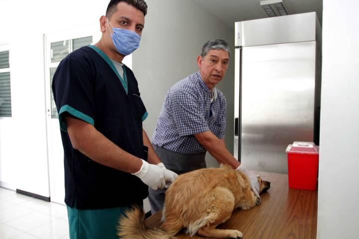 Realizará SESA Semana De Reforzamiento De Vacunación Antirrábica Canina Y Felina