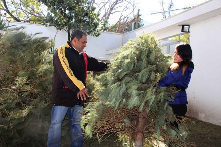 Habilitará CGE cinco centros de acopio de árboles naturales de navidad