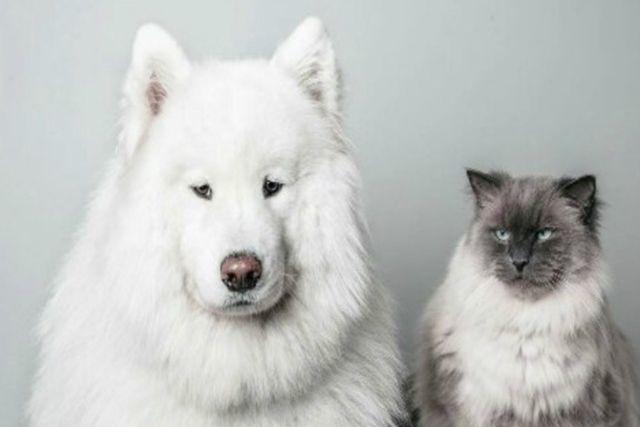 China prohíbe consumo de perros y gatos de su lista de animales comestibles