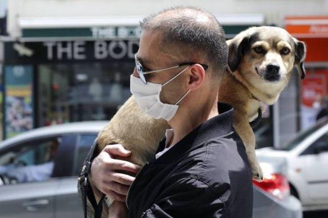 El Gobierno Británico estableció entrenar a perros para detectar el coronavirus