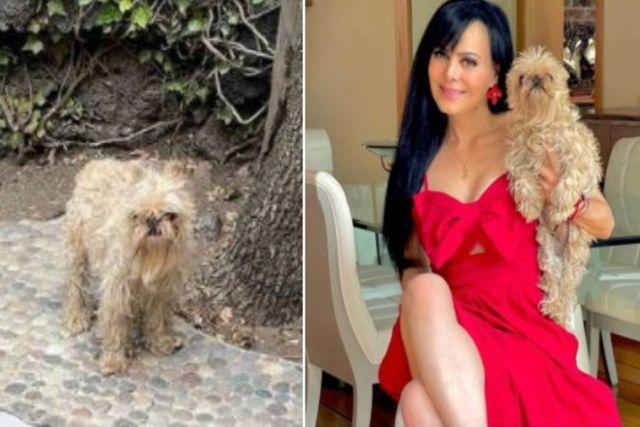 Critican a Maribel Guardia por posar junto a su perro todo descuidado