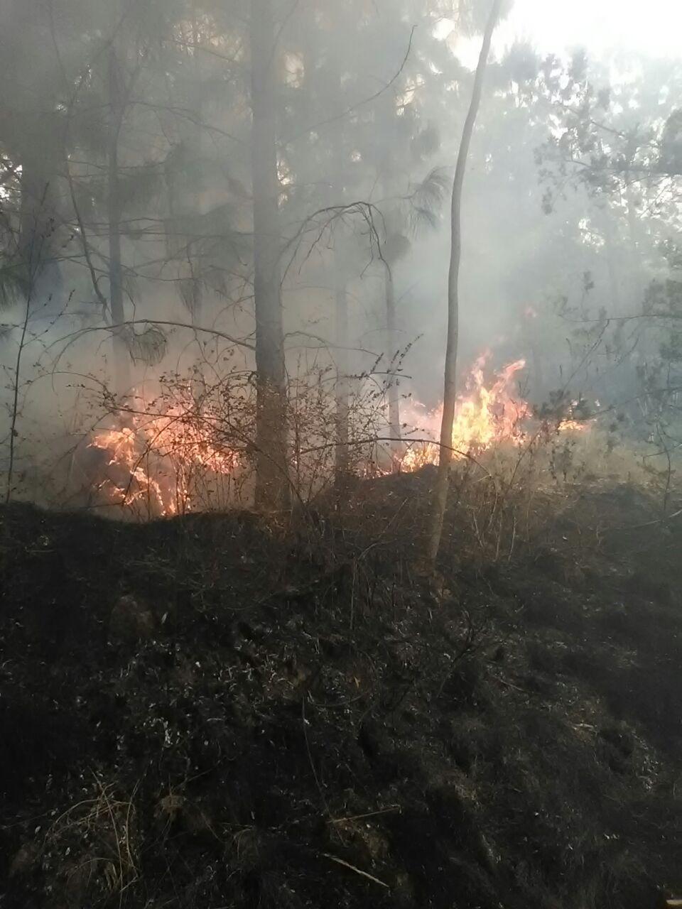 Sofocan elementos de PC Hueyotlipan Incendio en la Cañada