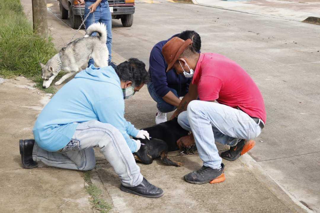 En Calpulalpan damos un paso importante en la prevención de la rabia: EPN