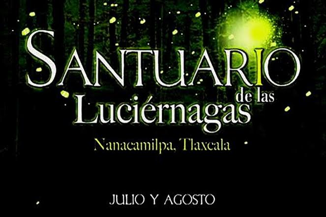 Danza de luces en el festival nacional de la luci rnaga Espectaculo de luciernagas en tlaxcala