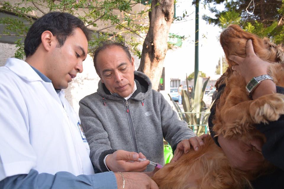Concluye semana nacional de vacunación antirrábica canina y felina