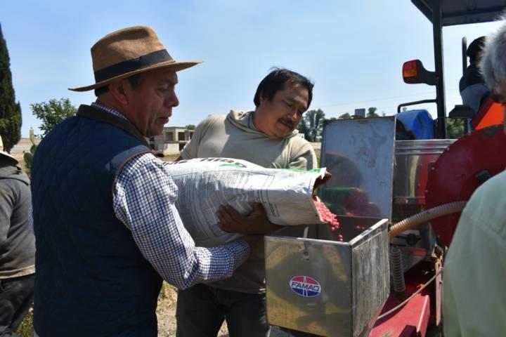 Alcalde mejora la siembra de 100 hectáreas subsidiando 125 bultos de semilla