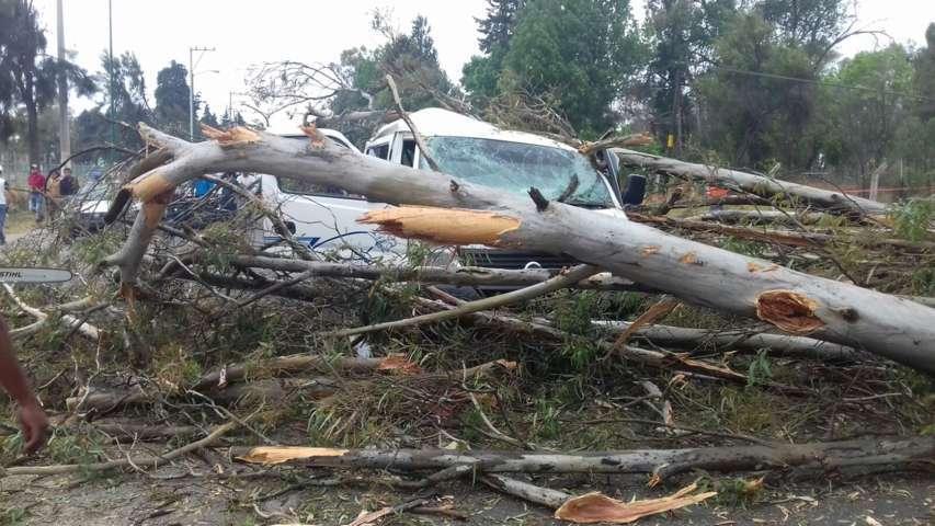 Unidad colectiva sale afectada por la caída de un árbol en Ixtacuixtla