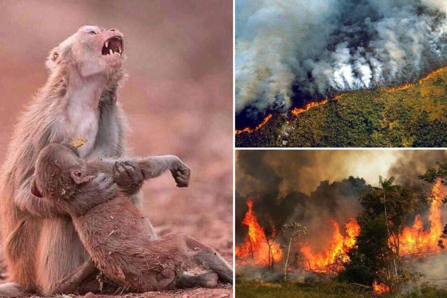 Circulan en redes sociales imágenes falsas de incendios en el Amazonas