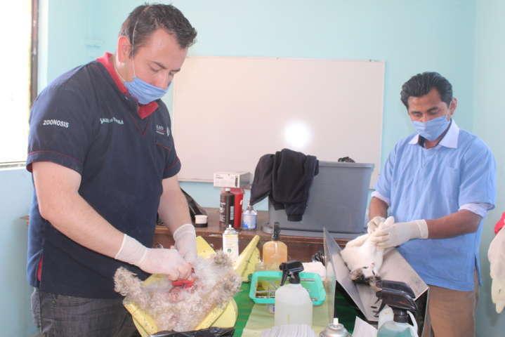 Gobierno Municipal de Tepetitla se suma a la campaña estatal de esterilización canina y felina