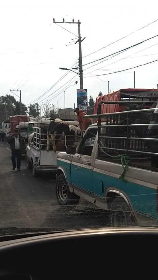 Tepetitla de Lardizábal suspende actividades en el tianguis de ganado