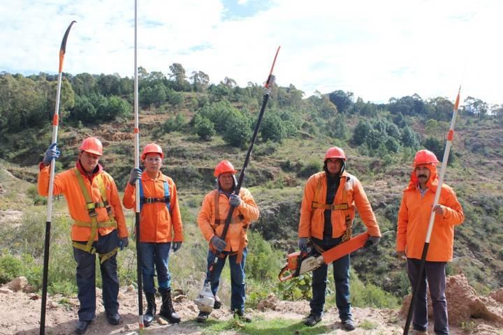 Presentan 62% de avance trabajos de sanidad forestal en Tlaxcala