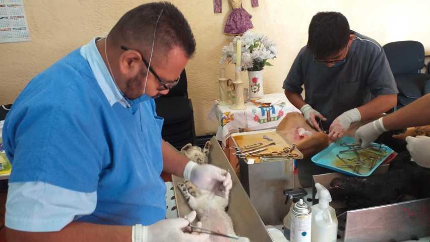 Con la esterilización de perros y gatos se combate la sobrepoblación