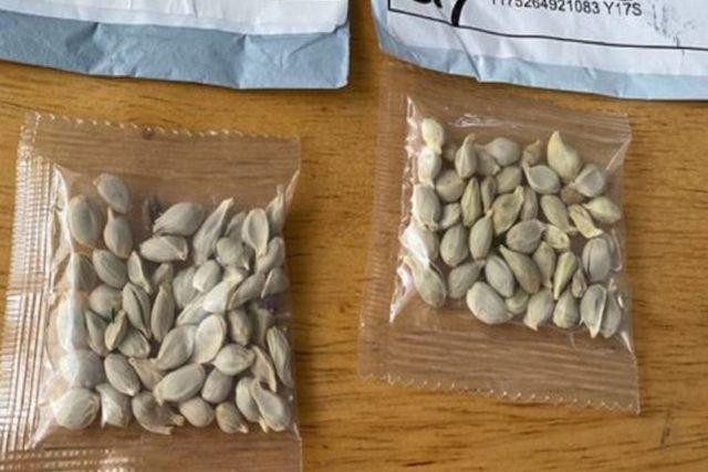 Semillas enviadas de China causan terror en el campo