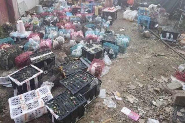 Hallan en un almacén de paquetería en China 5 mil gatos y perros sin vida