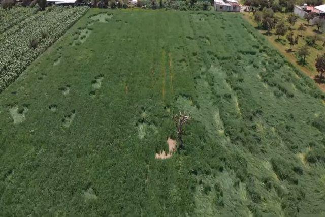 Registran en campos cultivos cercanos al socavón de Puebla extrañas figuras