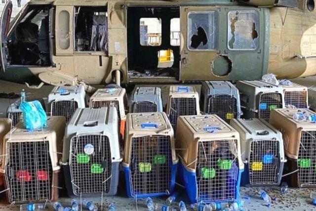 Soldados de EU abandonan a perros y serán sacrificados por los Talibanes