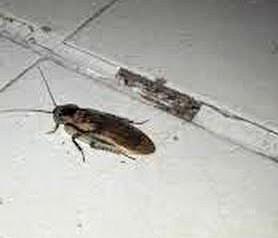 Cucarachas en comedor del ISSSTE; Coeprist guarda silencio