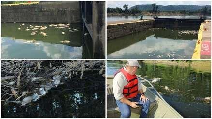 Derraman whisky en río de EEUU matando a miles de peces