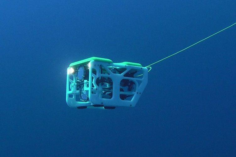 Desarrollan dron submarino para transportar crías de tiburón en España