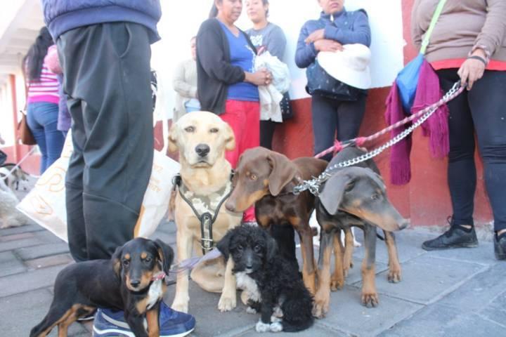 Ayuntamiento inicio campaña de esterilización de perros y gatos