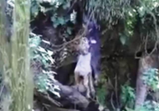 Presunto psicópata mata perros opera en Contla