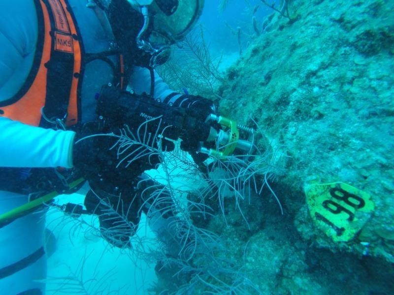 Astronautas sembrarán corales frente a costas de Florida con el fin de para salvar los arrecifes