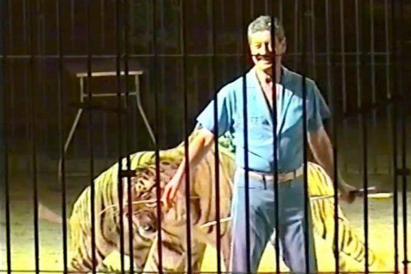 Domador es atacado por sus 4 tigres en Italia