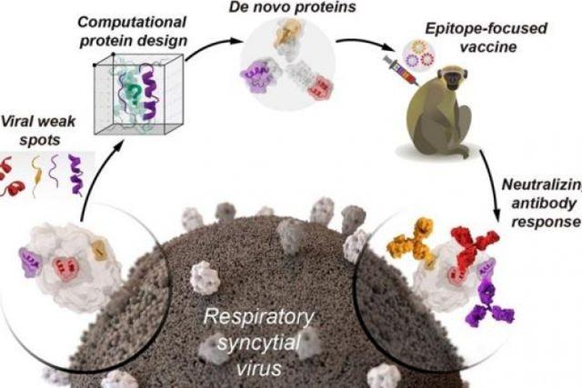 Hallan método que diseña proteínas artificiales a partir de una vacuna más segura