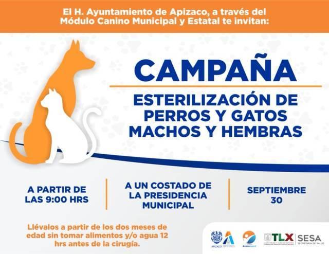 Anuncian campaña de esterilización de perros y gatos en Apizaco