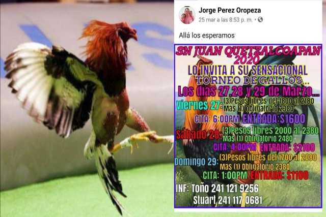 Galleros en plena contingencia arman torneos masivos en Tzompantepec