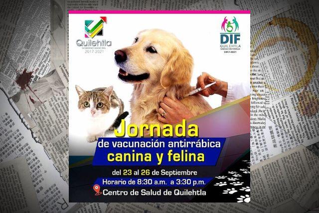 Inicia vacunación canina en el municipio de Quilehtla