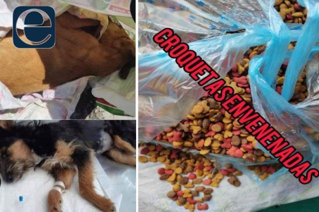 Donan croquetas envenenadas a un refugio canino de Huamantla
