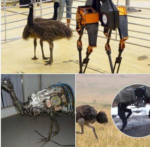 Terraplanistas aseguran que la tierra es plana y que los animales son robots