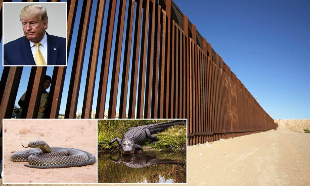 Reforzaré el muro fronterizo con fosa llena de víboras y de cocodrilos: Trump